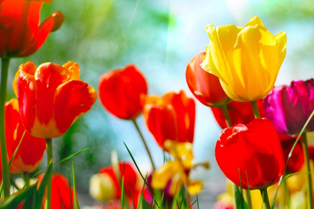 Adicciones en primavera
