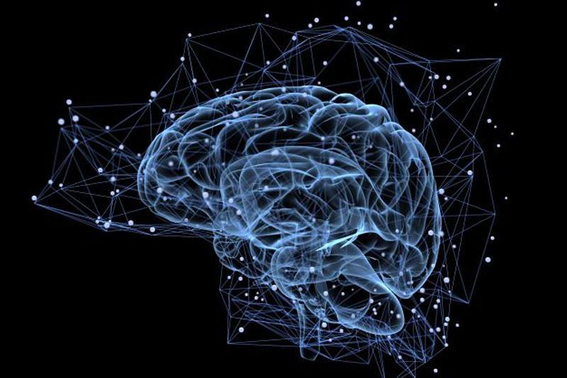 Cerebro y adicciones